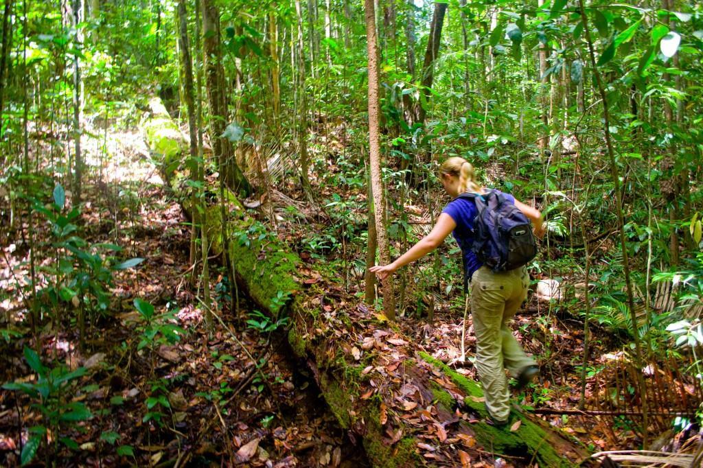 Lambir Hills National Park, Malaysia