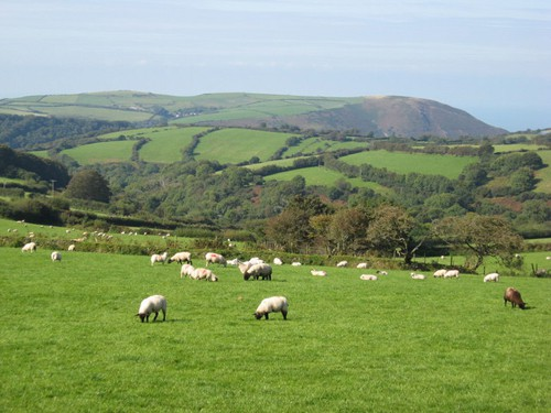 The Countryside in Devon - (photo by GeographBot)