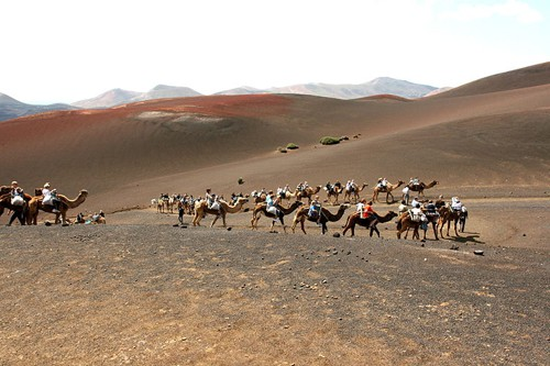 Camel Trekking in Lanzarote - photo by Frank Vincentz