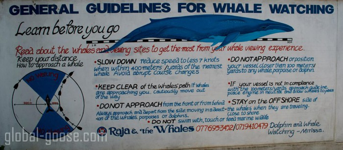 rules-for-approaching-whales