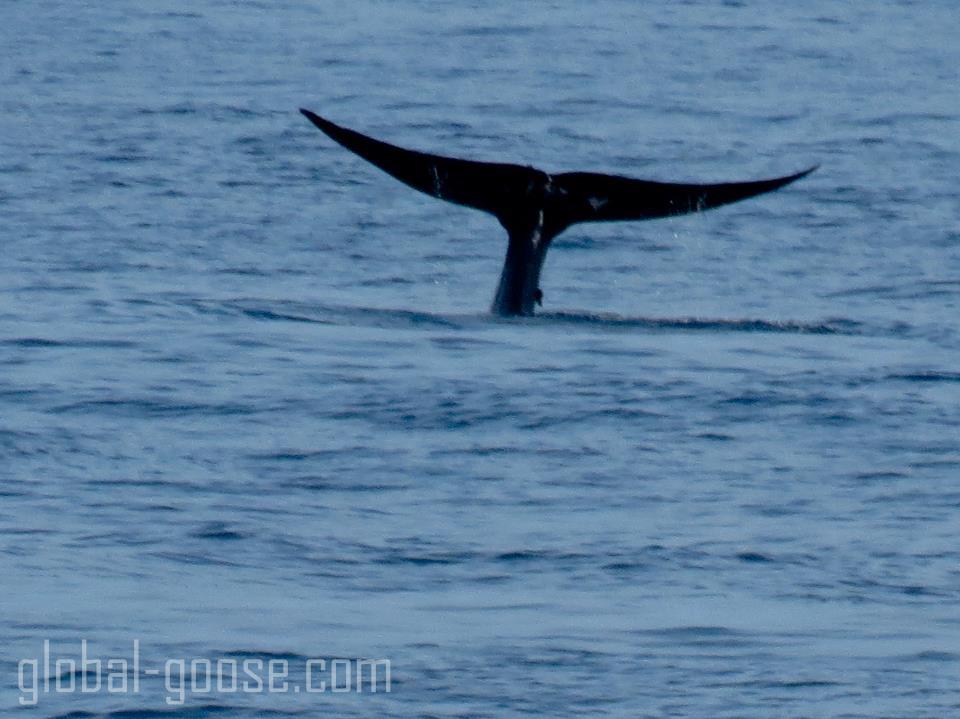 Sri Lanka whale