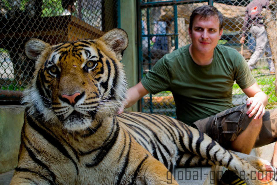 Thai Tiger 2