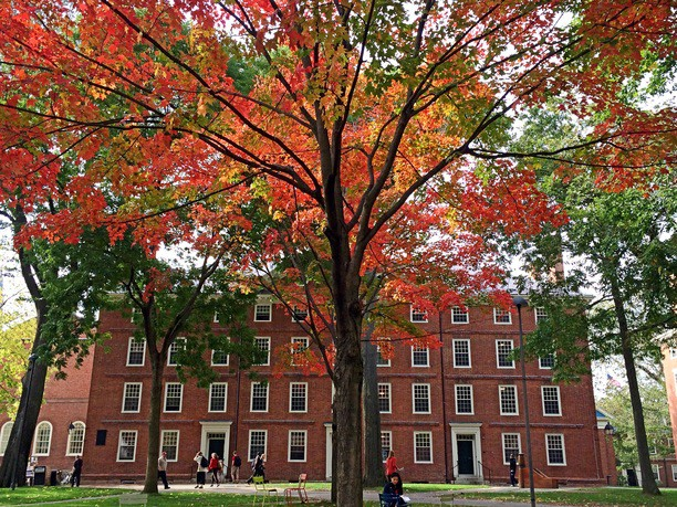 Harvard in Fall - Photo by Michael McCue via Trover