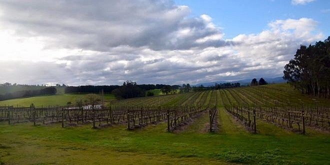 Five Yummy Things to Do in the Yarra Valley