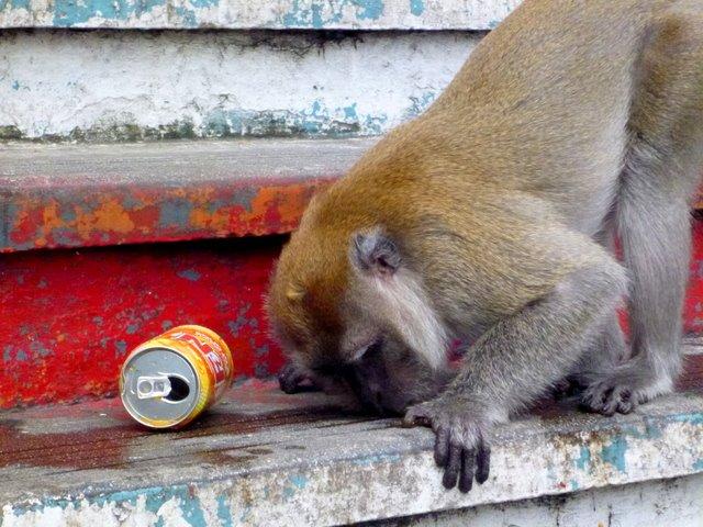 Stay Classy, Mr Monkey