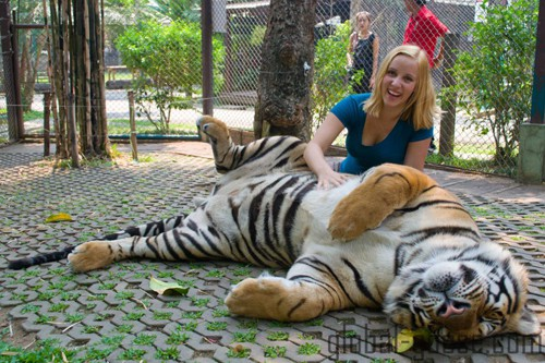 Travel creates truly amazing experiences - such as discovering that tigers love belly rubs.