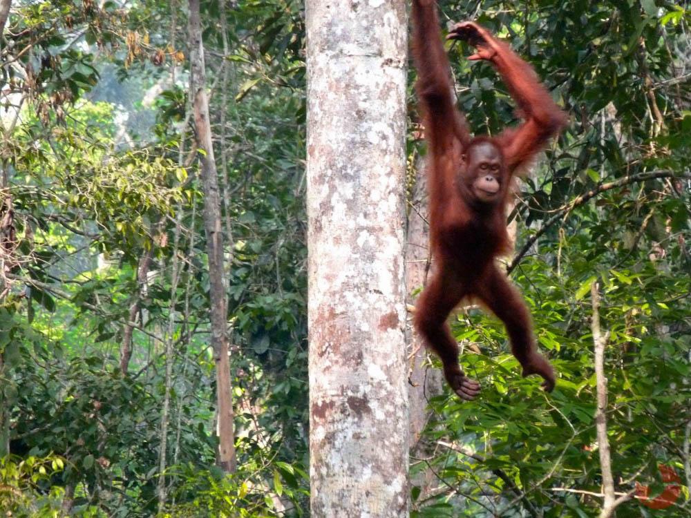 Malaysia - Borneo4