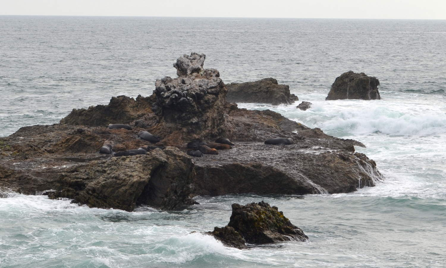 Can you spot the sea lions?