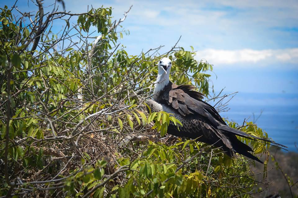 isla-de-la-plata-bird