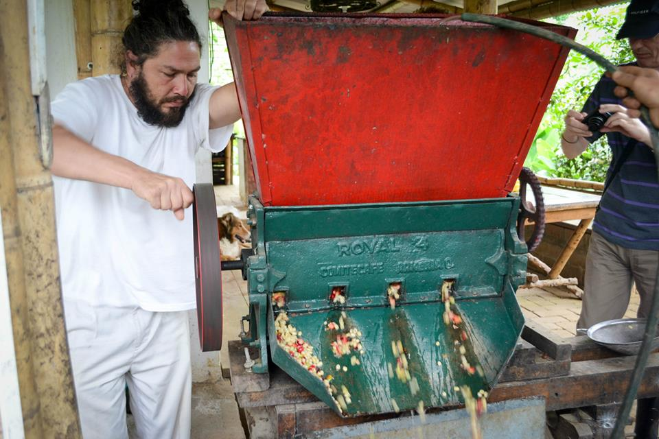 The machine that separates the coffee cherries from their skins.